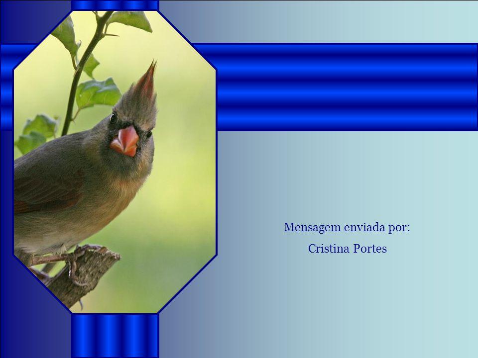 Mensagem enviada por: Cristina Portes