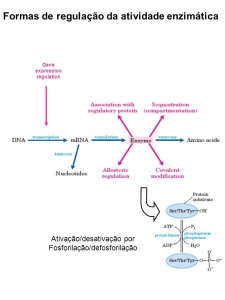 Gene expression regulation
