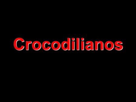 Crocodilianos.