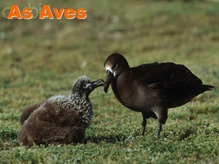 As Aves.