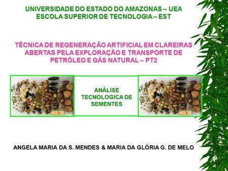 UNIVERSIDADE DO ESTADO DO AMAZONAS – UEA