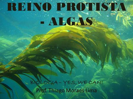 REINO PROTISTA - ALGAS BIOLOGIA – YES, WE CAN! Prof. Thiago Moraes Lima.