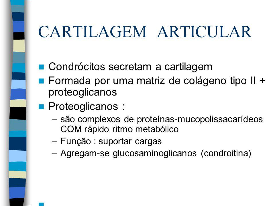 CARTILAGEM ARTICULAR Muda a composição da cartilagem Condrócitos:Menor capacidade de regenerar e de formar tecido novo Reduz a função reparadora do condrócito A rede colágena torna-se mais rígida Aumenta os danos causados por doenças