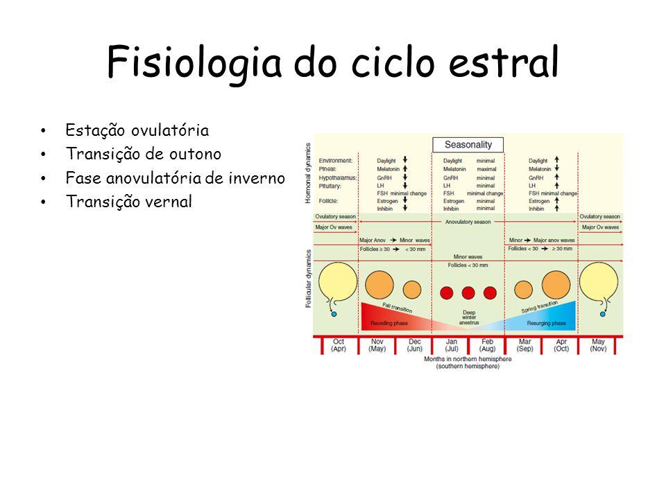 Fisiologia do ciclo estral Reprodutora de dia longo Comprimento do fotoperíodo