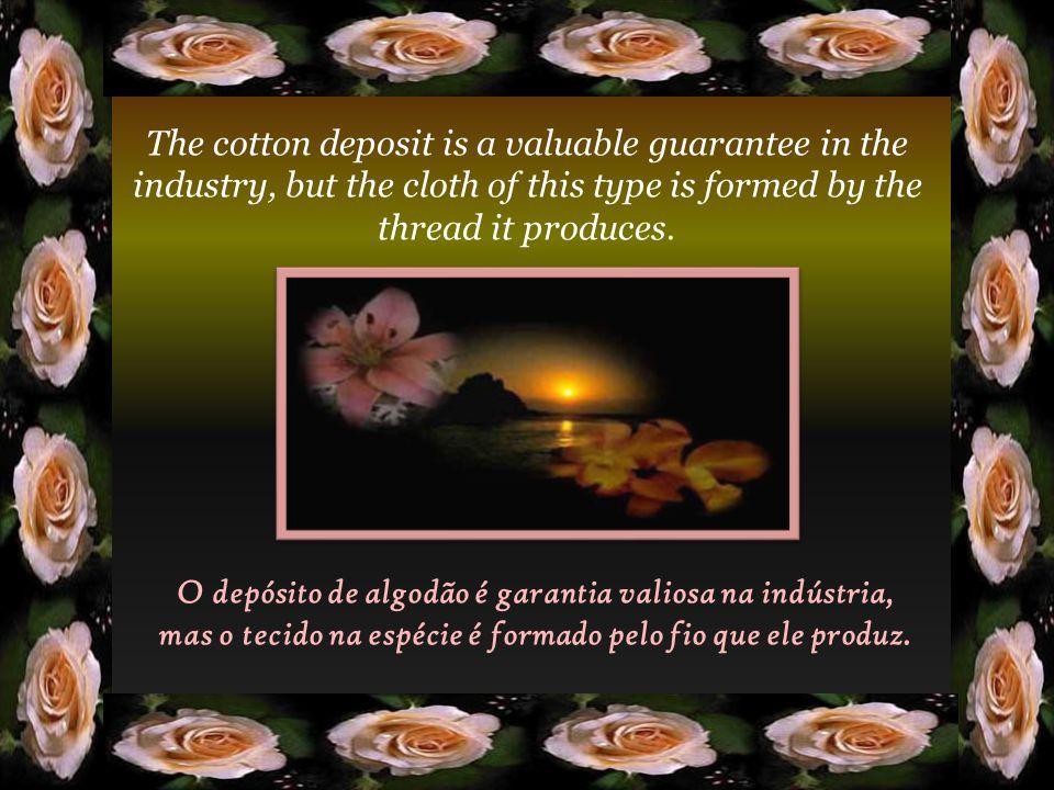 O depósito de algodão é garantia valiosa na indústria, mas o tecido na espécie é formado pelo fio que ele produz.