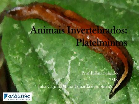 Animais Invertebrados: Platelmintos