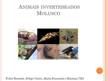 Animais invertebrados Molusco
