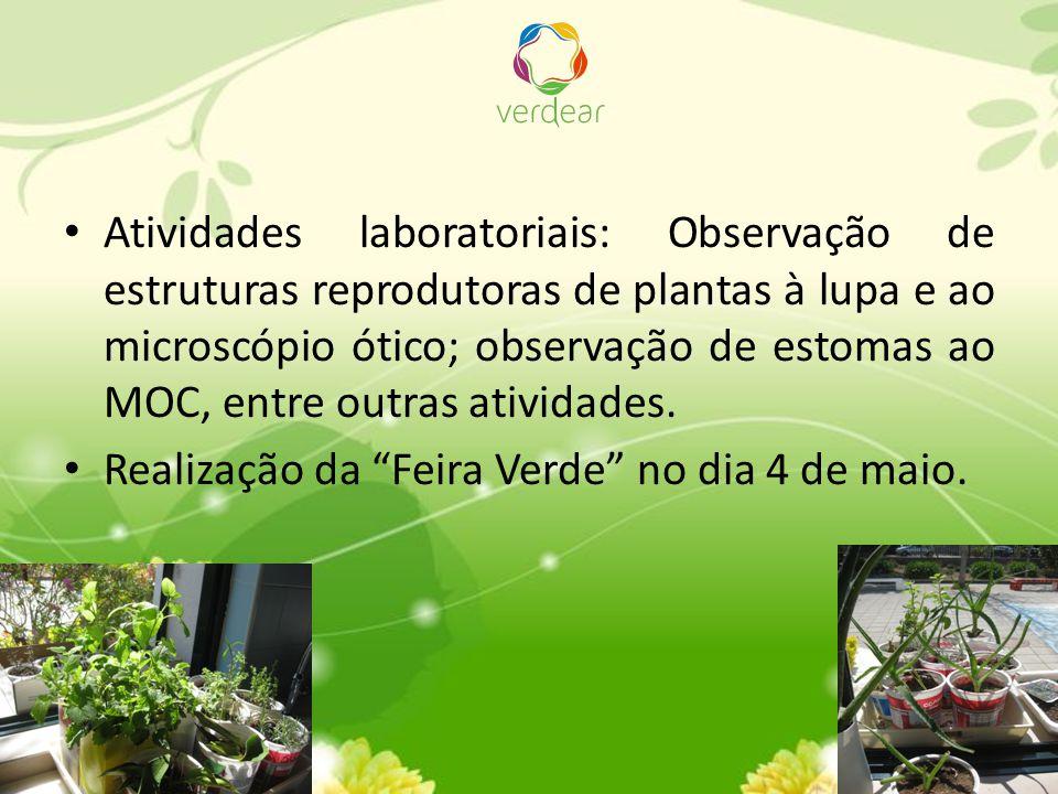 Organização de um pequeno herbário, com plantas aromáticas e medicinais e outras da flora local.