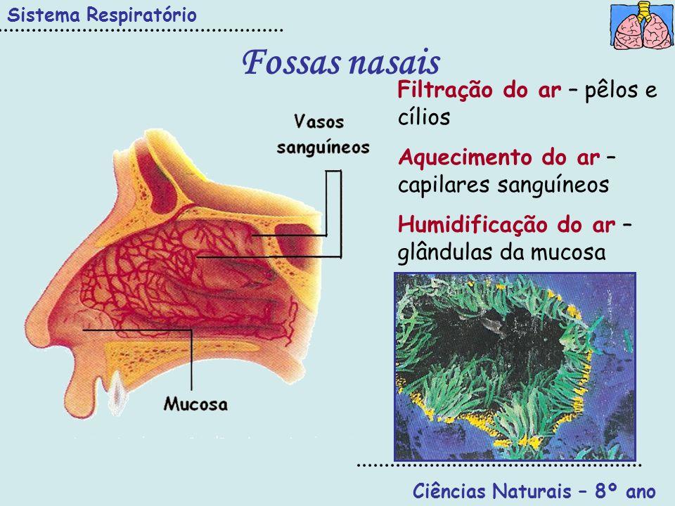 Ciências Naturais – 8º ano Sistema Respiratório Faringe Úvula Faringe Epiglote Boca Fossas nasais Esófago Permite a passagem do bolo alimentar (sistema digestivo); Permite a passagem do ar (sistema respiratório); Dupla função controlada pela epiglote