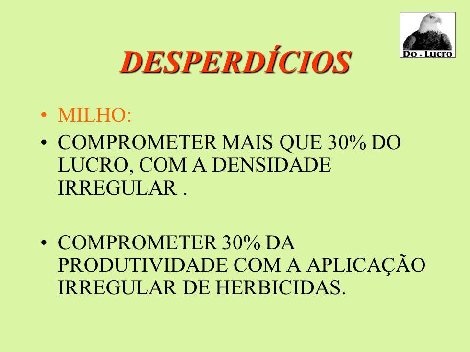 DESPERDÍCIOS MILHO: COMPROMETER MAIS QUE 30% DO LUCRO, COM A DENSIDADE IRREGULAR.