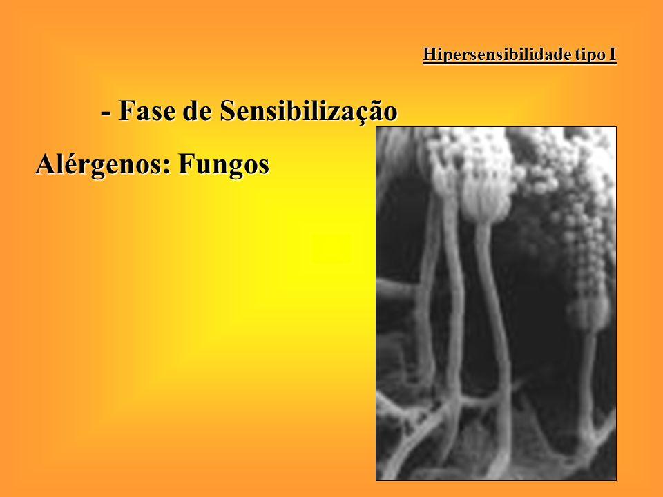 - Fase de Sensibilização Alérgenos: Fungos Hipersensibilidade tipo I