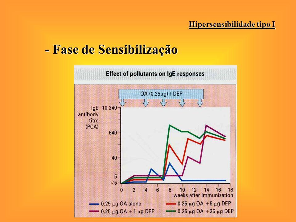 - Fase de Sensibilização Hipersensibilidade tipo I