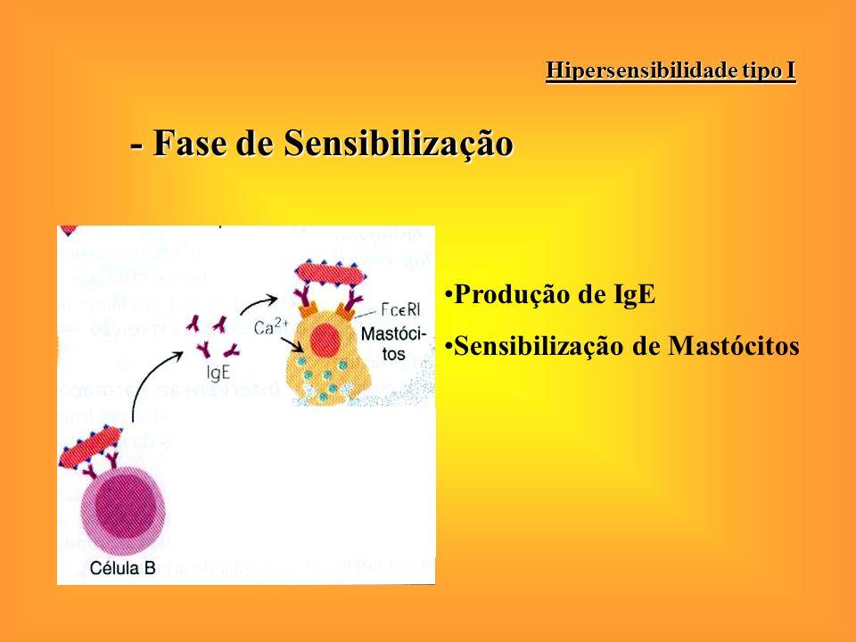 - Fase de Sensibilização Hipersensibilidade tipo I Produção de IgE Sensibilização de Mastócitos