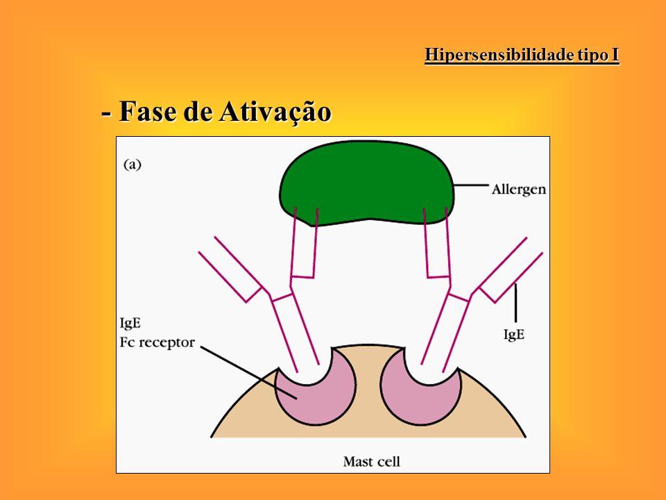 - Fase de Ativação Hipersensibilidade tipo I