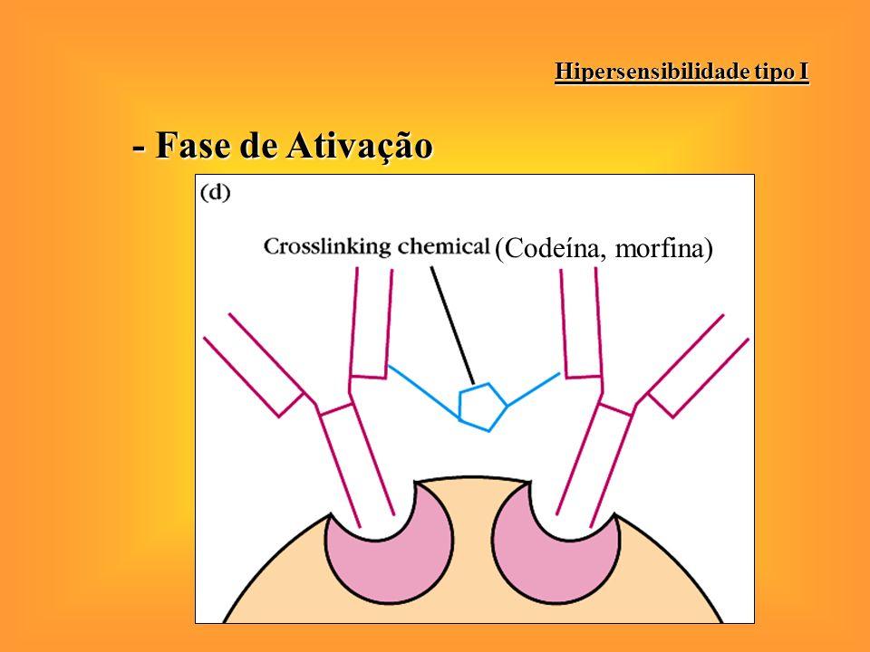 - Fase de Ativação Hipersensibilidade tipo I (Codeína, morfina)