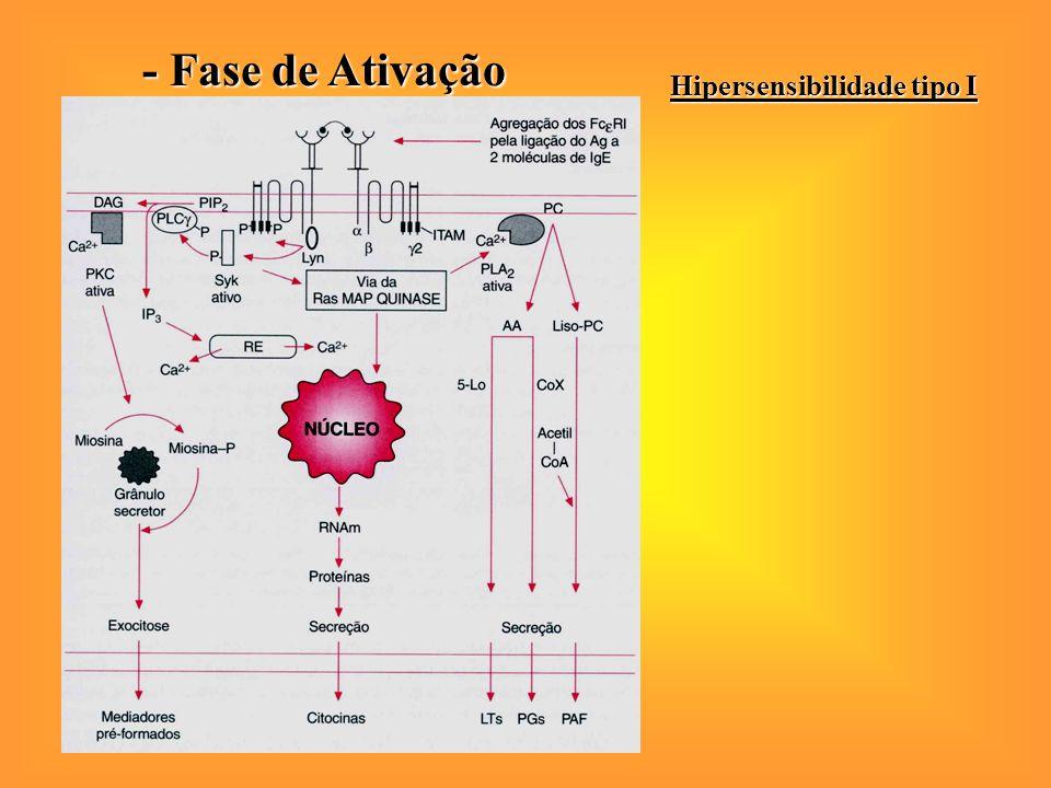 Hipersensibilidade tipo I - Fase de Ativação