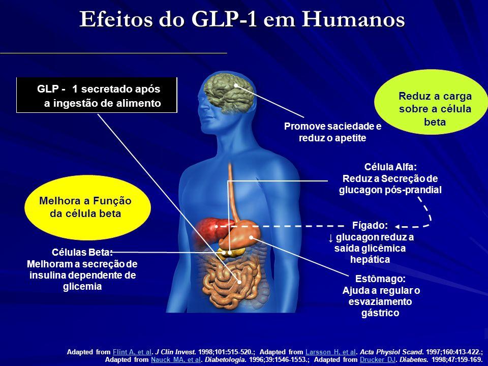 GLP-1 aumenta a insulina e reduz o glucagon, reduzindo os níveis glicêmicos Glicose (mmol/L) Placebo GLP-1 humano 15 10 5 0 -30060120180240 * * * * * * * Tempo (min) 300 200 100 0 Insulina (pmol/L) Tempo (min) -30060120180240 * * * * * * * * Glucagon (pmol/L) -30060120180240 20 10 0 Tempo (min) * * * * Média (SE); n=10; *p<0,05.