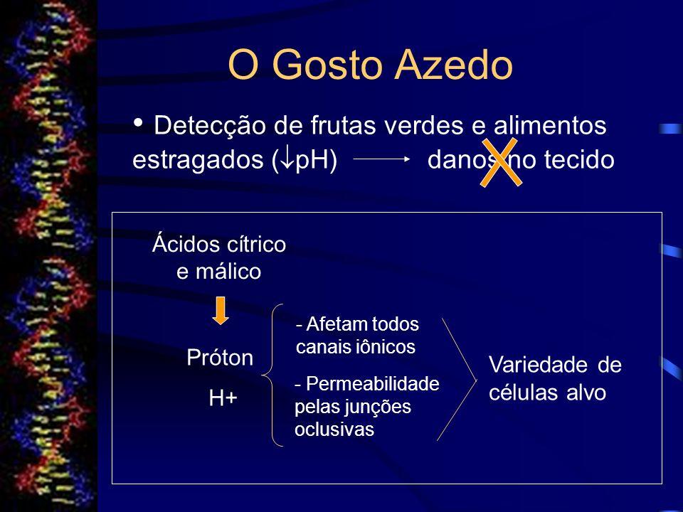 Genes Codificadores de Receptores do Gosto Mecanismos de transdução gustativa - Receptores de membrana; - Ligação do nucleotídeo guanina; - Proteínas (ptn G); - Segundos mensageiros; - Canais iônicos.