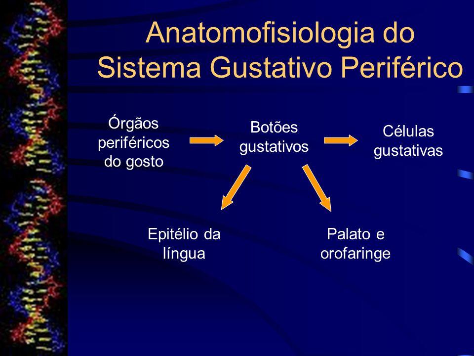 Localização das Células Gustativas Nos seres humanos, 2/3 dos botões gustativos estão localizados na língua em 3 estruturas especializadas: Papilas Linguais.Papilas Linguais as papilas fungiformes; foliadas; e circunvaladas.