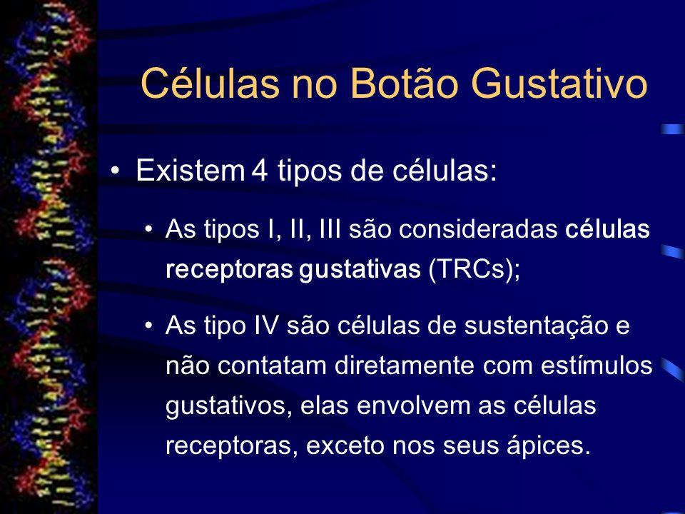 Substituição das Células nos Botões Gustativos Cada célula tem uma semi-vida de aproximadamente 10 dias, em seguida é substituída por diferenciação de células basais, que migram do epitélio circundante para a parte basal do botão gustativo.