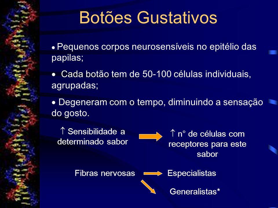 Estímulo Gustativo Potencial de Ação Liberação do neurotransmissor Na+ e Ca+2 (despolarização) K+ (repolarização e pós- hiperpolarização) Estimulo da fibra nervosa aferente Neuromodu- ladores do botão