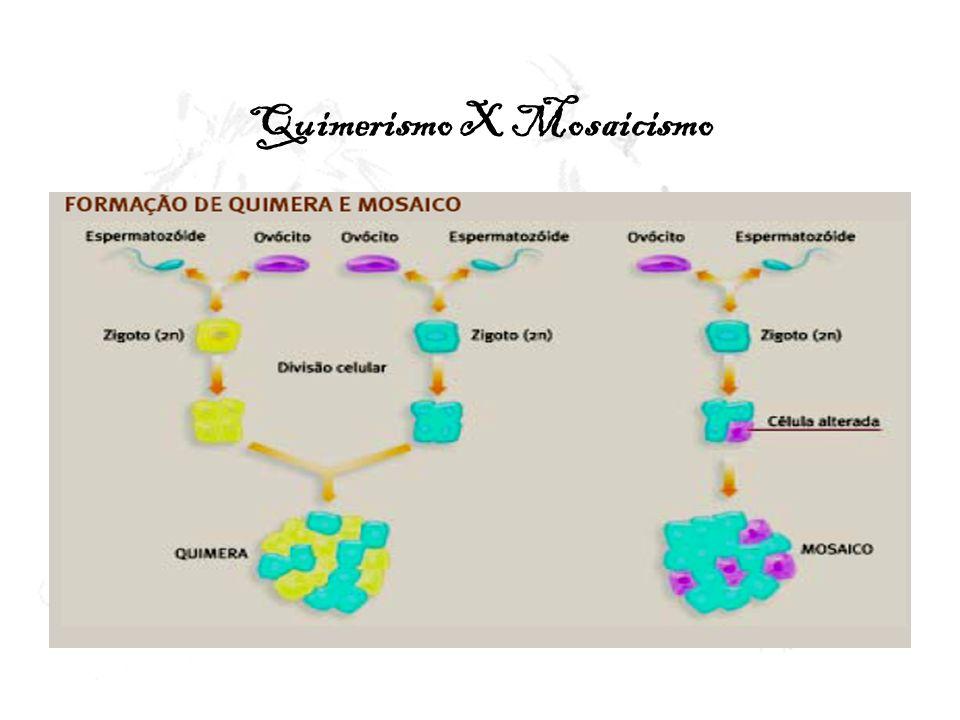 Quimerismo em seres humanos Espécie humanararos exemplos de quimeras verdadeiras resultantes da fusão de células de dois embriões Descoberta de quimera na espécie humanafusão de zigotos de sexos opostos Alterações no desenvolvimento sexual Tipagem de células sangüíneas Indivíduos pertencentes a mais de um grupo »Quimeras sangüíneas