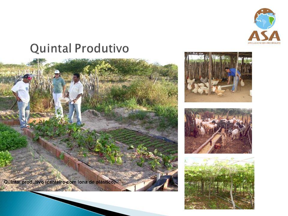 Cacimba: é um poço raso, capaz de fornecer água para uso humano, animal e agrícola.