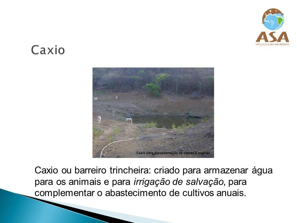 Pode-se plantar nas margens, na vazante, ou abaixo do açude com irrigação de salvação.