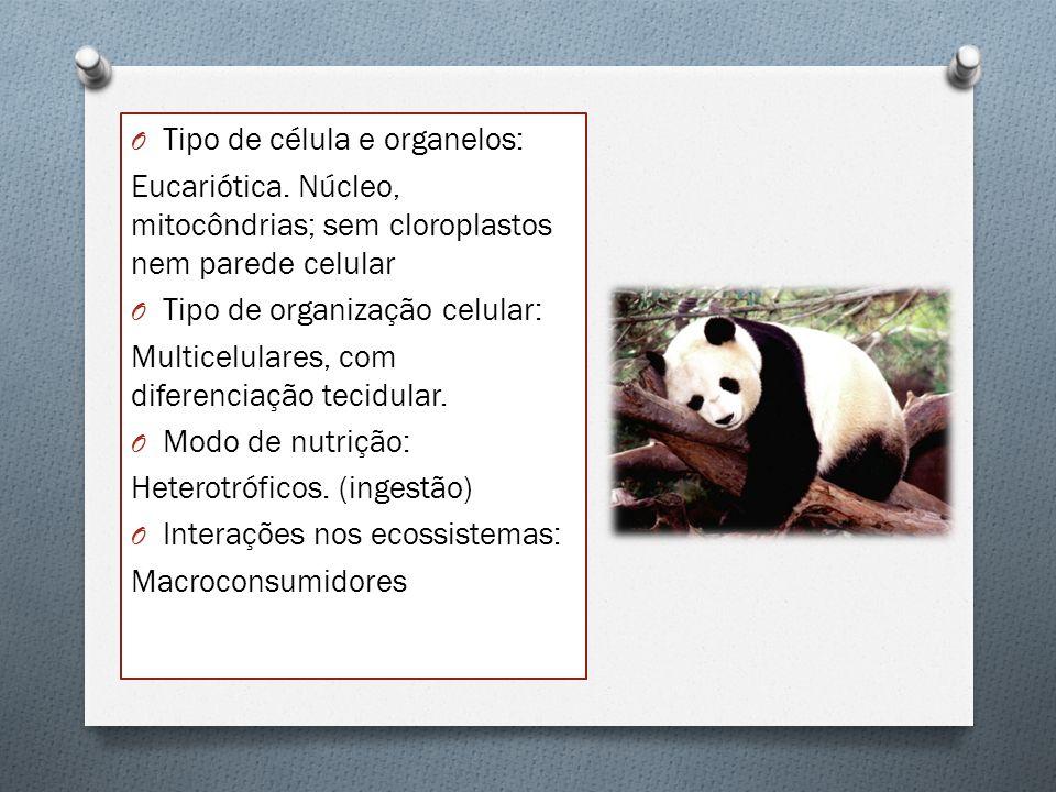 Classificação simplificada dos animais A distribuição dos animais por filos segue as características estruturais e critérios relacionados com a embriologia.