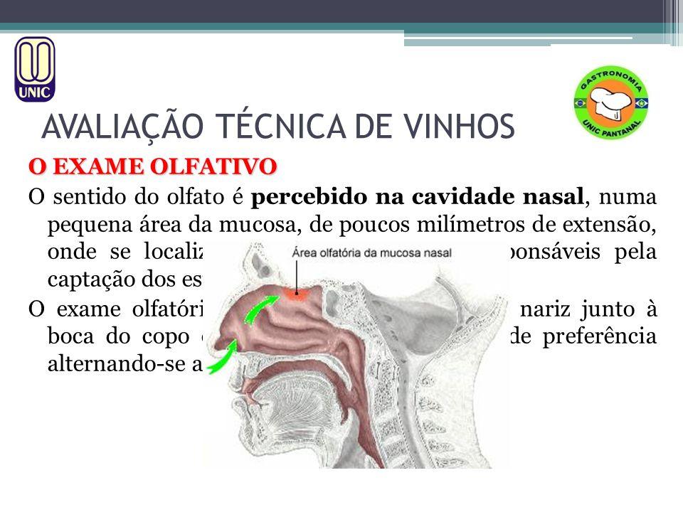 AVALIAÇÃO TÉCNICA DE VINHOS O EXAME OLFATIVO OS AROMAS 1.