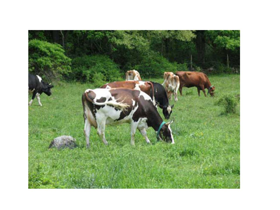 Agricultura ou fruticultura Deve ser praticada fora da reserva legal e das áreas de preservação permanente