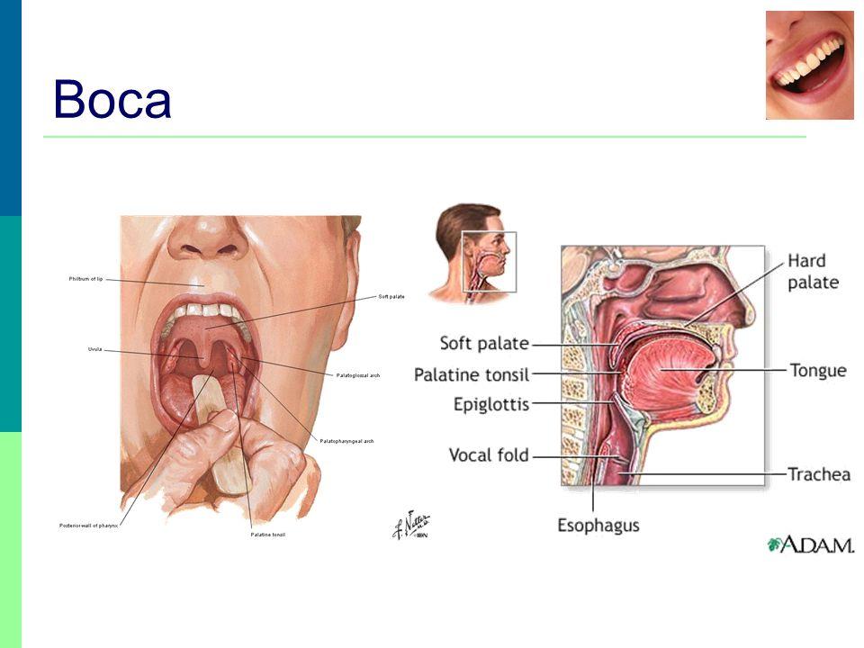 Boca / dentes