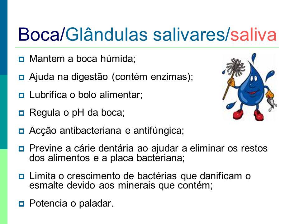 Alimento Saliva (Acção química) + Dentes e língua (Acção mecânica) Mastigação e ensalivação Bolo alimentar Boca / digestão