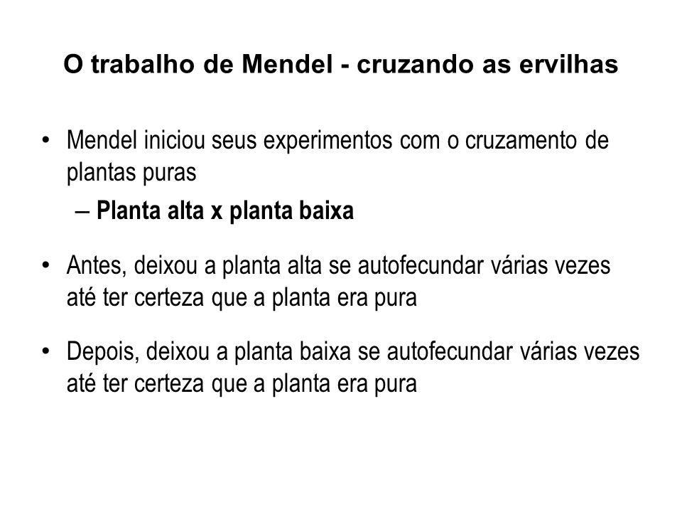 Durante 2 anos Mendel fez testes de pureza e de escolha das características que utilizaria em seus experimentos definitivos.