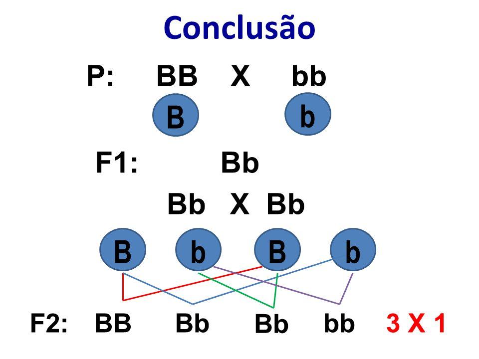 Nos organismos, os dois fatores para uma certa característica podem ser iguais (VV ou vv) ou diferentes (Vv).