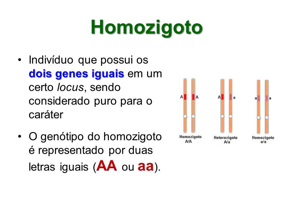 Heterozigoto Indivíduo que possui um gene diferente do outro em um certo locus Cada um deles determina um fenótipo diferente para o caráter consideradoCada um deles determina um fenótipo diferente para o caráter considerado; são impuros ou híbridos ( Aa )