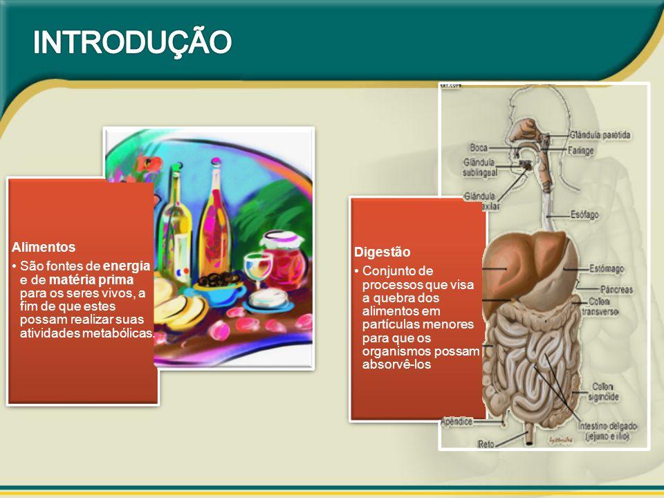 Podem ser absorvidos diretamente H2O Sais minerais Vitaminas LipossolúveisHidrossolúveis Devem ser quebradosCarboidratosLipídiosProteínas