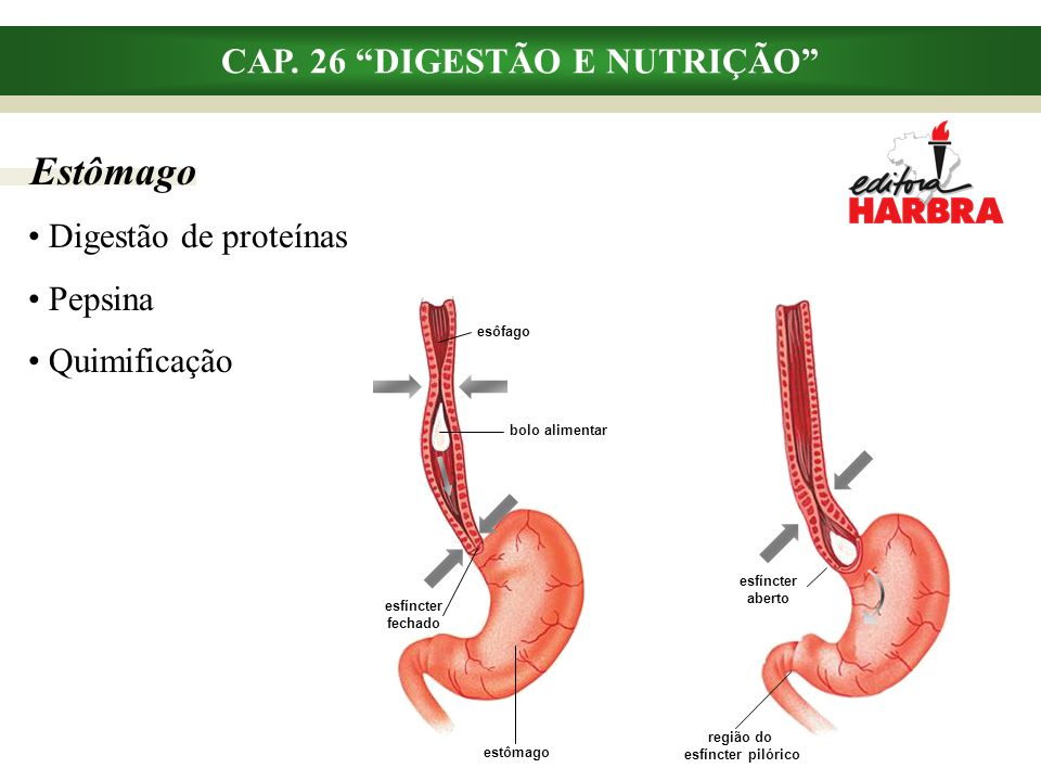 Intestino delgado CAP.