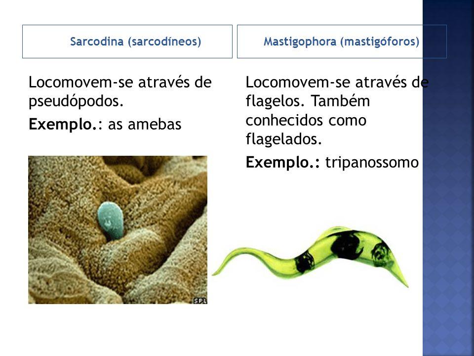 Ciliophora (ciliados)Sporozoa (esporozoários) Locomovem-se através de cílios.