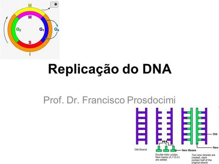 Replicação do DNA Prof. Dr. Francisco Prosdocimi.