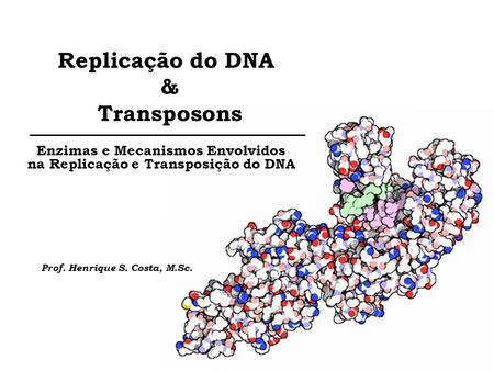 Replicação do DNA & Transposons