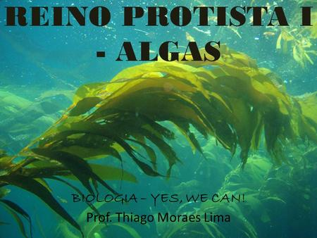 REINO PROTISTA I - ALGAS BIOLOGIA – YES, WE CAN! Prof. Thiago Moraes Lima.