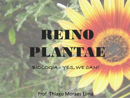 REINO PLANTAE BIOLOGIA – YES, WE CAN! Prof. Thiago Moraes Lima.