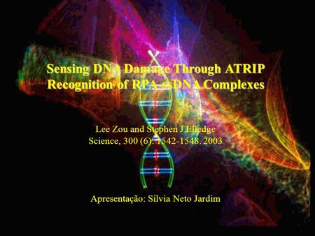 Sensing DNA Damage Through ATRIP Recognition of RPA-ssDNA Complexes Lee Zou and Stephen J.Elledge Science, 300 (6): 1542-1548. 2003 Apresentação: Sílvia.