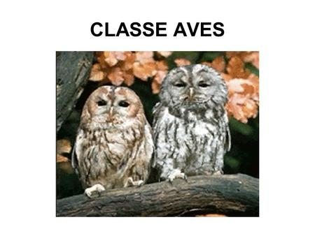 CLASSE AVES.