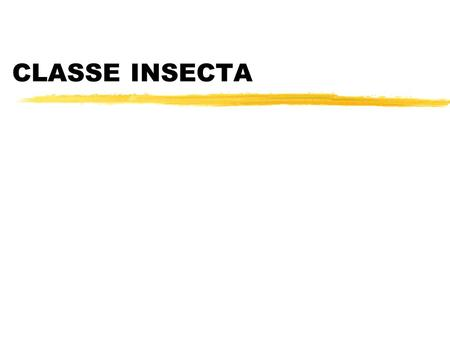 CLASSE INSECTA.