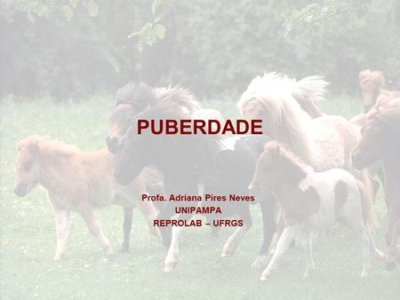 PUBERDADE Profa. Adriana Pires Neves UNIPAMPA REPROLAB – UFRGS.