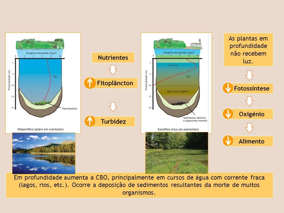 Sedimentos Desflorestação.Erosão. Agricultura intensiva.