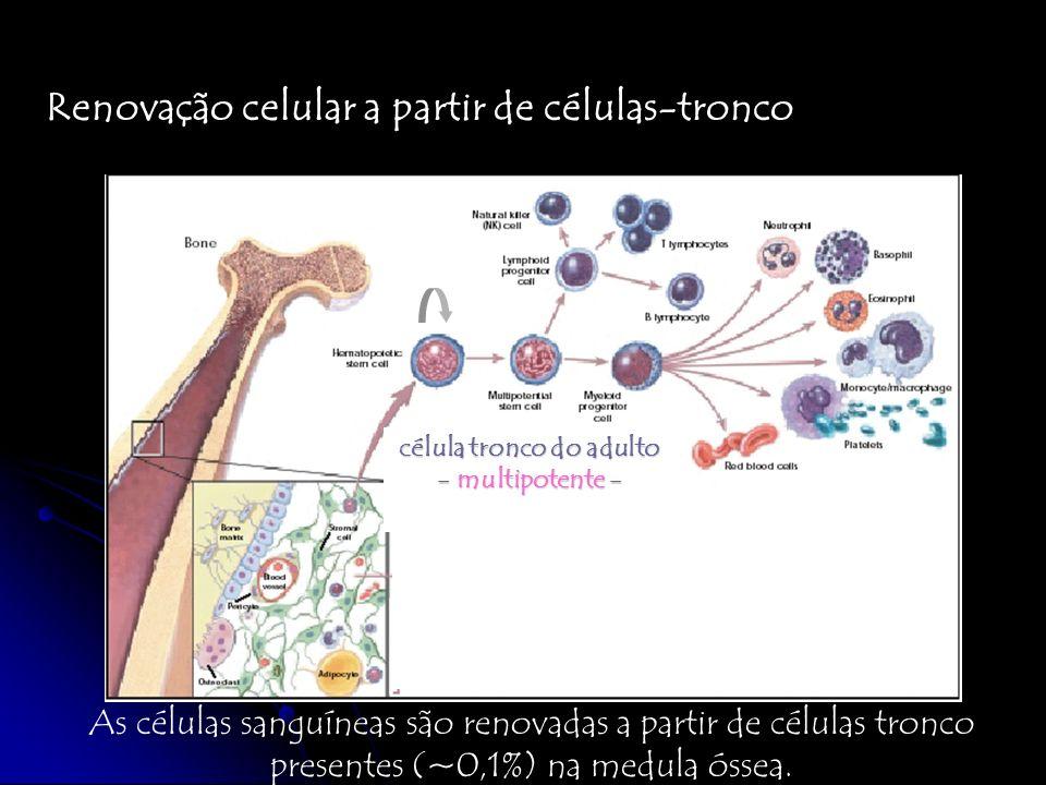 Cada órgão/tecido apresenta seu conjunto de células-tronco medula óssea (CT hematopoiética) pele (CT epitelial) músculo (CT muscular) cérebro (CT neuronal) múltiplos (CT mesenquimal) fígado rins coração etc QUAL A RELAÇÃO EXISTENTE ENTRE AS DIFERENTES POPULAÇÕES DE CÉLULAS-TRONCO ADULTAS.