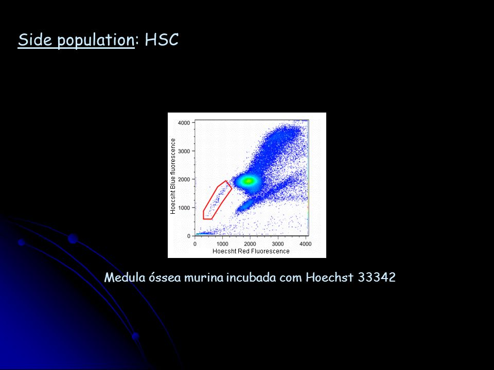 Morfologia: célula tronco muscular (célula satélite) Satellite cell activation in diaphragm muscle fibers.